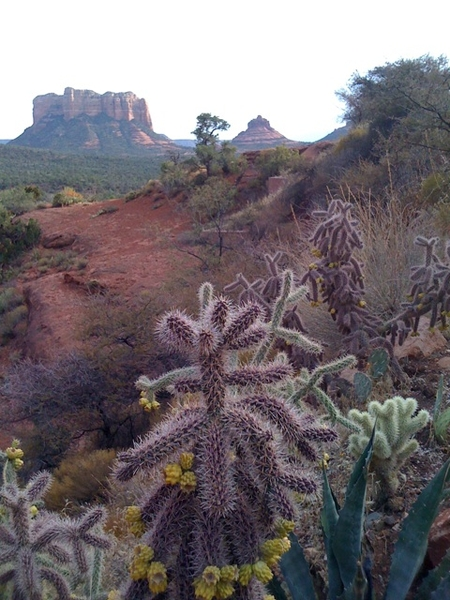 Last shot of the red rocks including a cactus that attacked my daughter