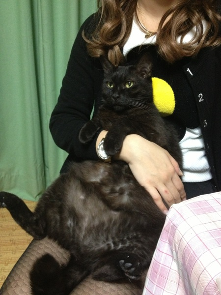 おばちゃん家遊びに行ったら ネコがみた事ないくらい大っきくなってた(´◇`)♡