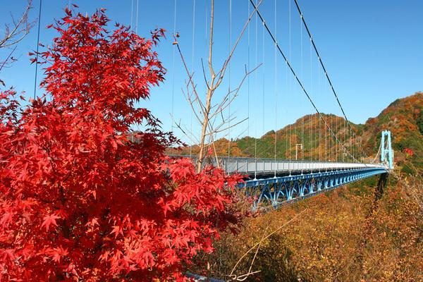 【常陸太田市・竜神峡】本州一の長さを誇る竜神大吊橋から眺める紅葉もまた一興
