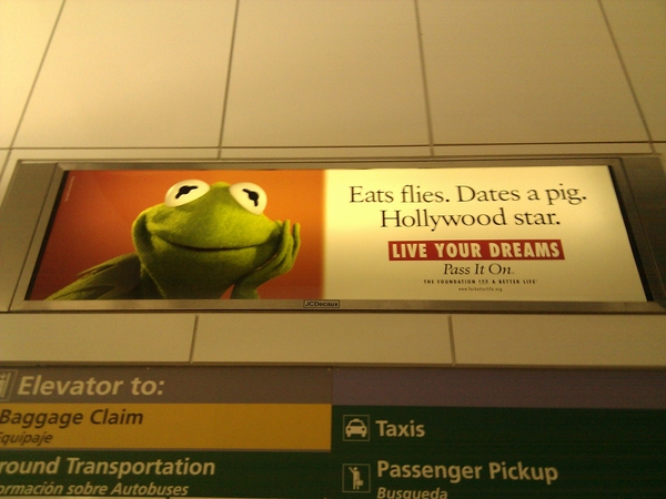Funny advertisement with a frog