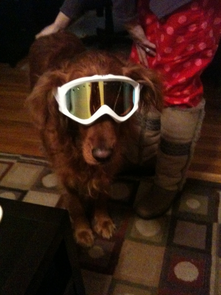 The snow is falling in Snowmass!!!  Hopefully some awesome powder tomorrow AM!  I miss my Chloe!!! Viceroy tonight