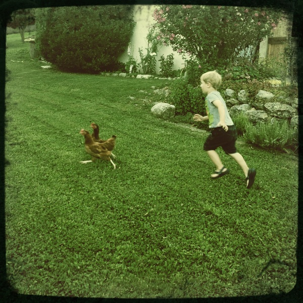 Fletcher of the day: chasing chickens