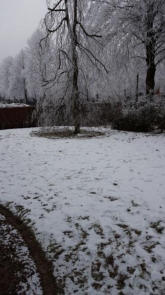 Winterwonderland  #buienradar